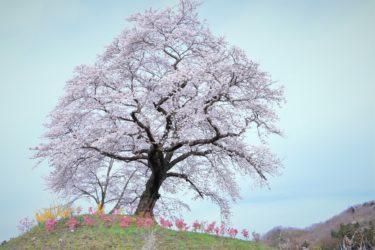 家墓を建てない「永代供養」の選択 納骨堂&納骨室そして樹木葬、自然葬