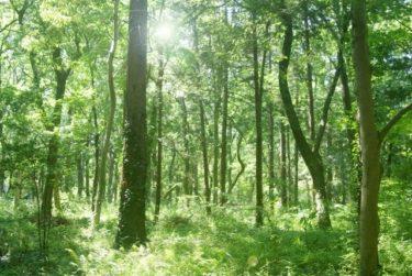 日本の弔い方と永代供養付き自然葬について